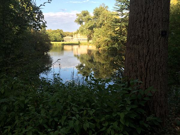 Buckingham Palace Lake and Garden